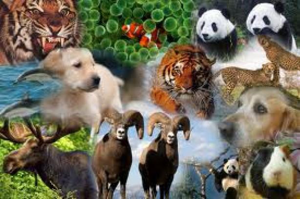 los-animales